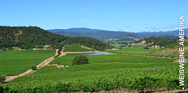 Weißweine aus Kalifornien