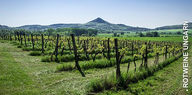 Ungarischer Wein bei Vinum Nobile bestellen