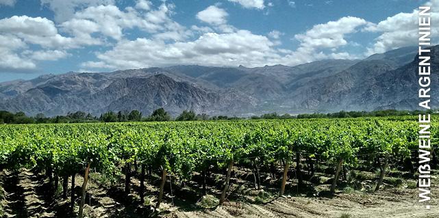 Weißweine aus Argentinien