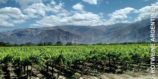 Argentinischer Wein bei Vinum Nobile