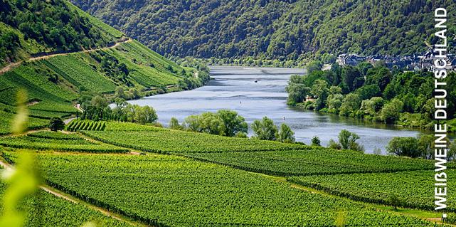 Weißweine aus Deutschland